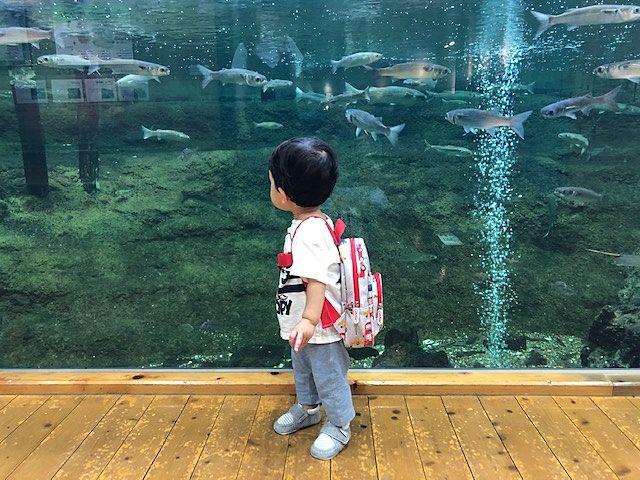 目の前には魚がいっぱい