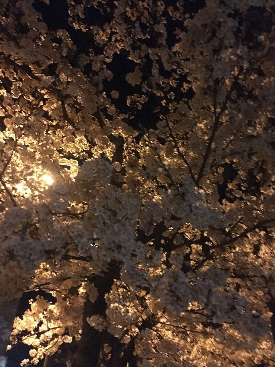 夜桜。さてここはどこでしょうか?